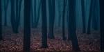Dans les bois…