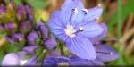 Printemps des fleurs