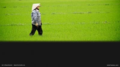 Paysanne vietnamienne